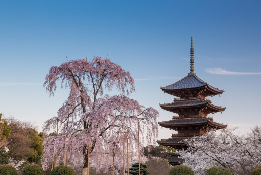 京都府、優良宿泊施設に認証ステッカー提供へ〜民泊専門メディア Airstair