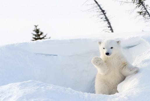 Airbnb、冬の動物をもふもふする「動物と暮らすように旅する」世界のお部屋4選公開〜MINPAKU.Biz
